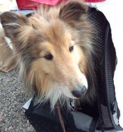 ひろしまみなとマルシェ「DOG LIFE PLUS(ドッグ ライフ プラス)」看板犬スティック