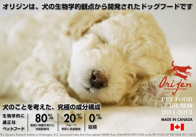 犬のプレミアムフードの通販DOG LIFE PLUS が販売する、穀物不使用のプレミアムフード、オリジンのご紹介です